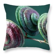 Fruits Of Wild Lucerne Throw Pillow