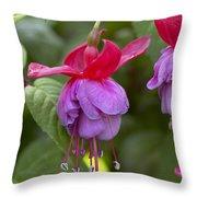 Fuchsia Fuchsia Sp Red And Blue Variety Throw Pillow