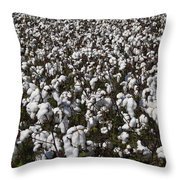Full Frame Alabama Cotton Crop Throw Pillow