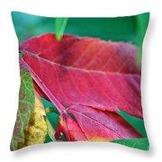 Full Spectrum Sumac Throw Pillow