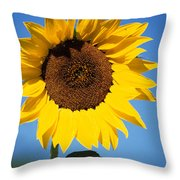 Full Sunflower Throw Pillow