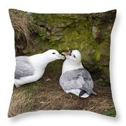 Fulmar Pair Bonding Throw Pillow