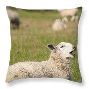 Funny Sheep Throw Pillow