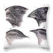 Galapagos Finches Throw Pillow