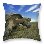 Galapagos Giant Tortoise Geochelone Throw Pillow