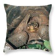Galapagos Giant Tortoise Throw Pillow