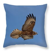 Galapagos Hawk Flying Throw Pillow