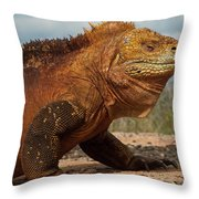 Galapagos Land Iguana Conolophus Throw Pillow