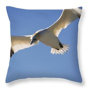 Gannet, Parc National De Throw Pillow