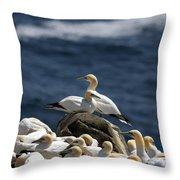Gannets Gannets Everywhere Throw Pillow