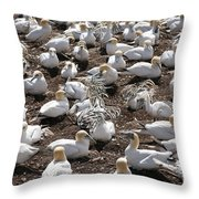 Gannets Showing Fencing Behavior Throw Pillow