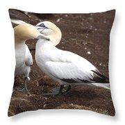 Gannets Showing Mutual Preening Behavior Throw Pillow