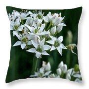Garlic Chive Blooms Throw Pillow