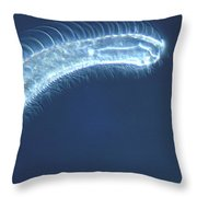 Gastrotrich Throw Pillow