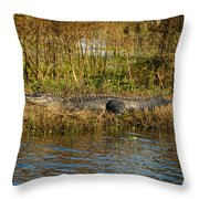 Gator Break Throw Pillow