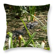 Gator Sunning Throw Pillow