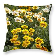 Gazania Gazania Rigens Flowers Throw Pillow
