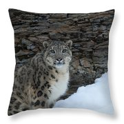 Gaze Of The Snow Leopard Throw Pillow