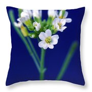 Genetically Modified Plant Throw Pillow