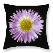 Gerber Daisy In Black Background Throw Pillow