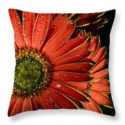 Gerbera Orange Throw Pillow