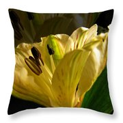 Ghosted Frecia Throw Pillow