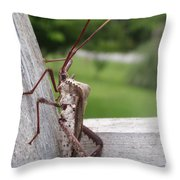 Giant Assassin Bug Throw Pillow