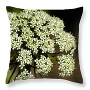 Giant Buckwheat Flower Throw Pillow