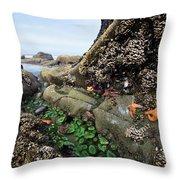 Giant Green Sea Anemone Anthopleura Throw Pillow