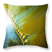 Giant Kelp, Catalina Island, California Throw Pillow