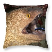Giant Moray Eel And Cleaner Wrasse Throw Pillow