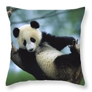 Giant Panda Cub Resting In A Tree Throw Pillow