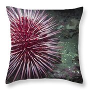 Giant Red Sea Urchin Throw Pillow