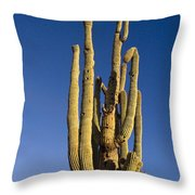 Giant Saguaro Cactus Portrait With Blue Sky Throw Pillow