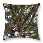 Giant Sequoias Throw Pillow