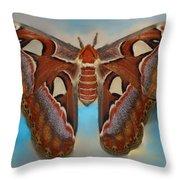 Giant Silk Moth Throw Pillow