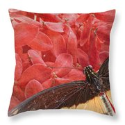 Giant Swallowtail - 3 Throw Pillow