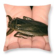 Giant Water Bug Throw Pillow