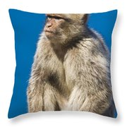 Gibraltar Barbary Macaque Macaca Throw Pillow