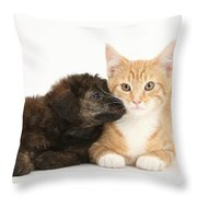Ginger Kitten And Toy Poodle Throw Pillow