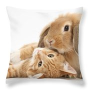 Ginger Kitten Lying With Sandy Lionhead Throw Pillow