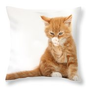 Ginger Kitten Throw Pillow