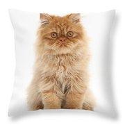 Ginger Persian Kitten Throw Pillow