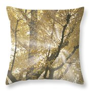 Ginkgo Tree With Sunlight Streaming Throw Pillow