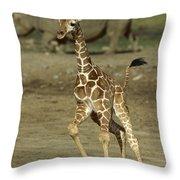 Giraffe Giraffa Camelopardalis Juvenile Throw Pillow