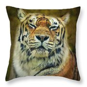 Give Me Your Tender Look Throw Pillow