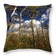 Glacier Aspens Throw Pillow
