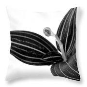 Glamour Throw Pillow