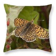 Glanville Fritillary Throw Pillow