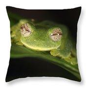 Glass Frog Centrolene Tayrona, Sierra Throw Pillow